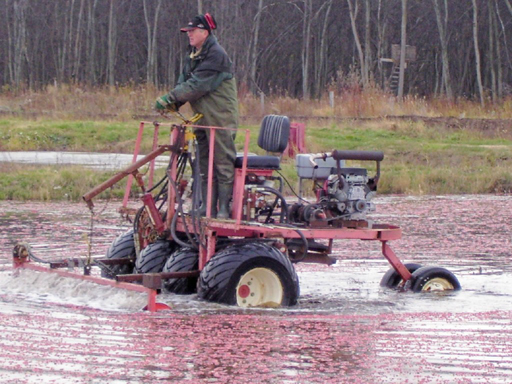 cranberry harvest machine